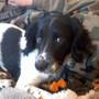puppylover1525