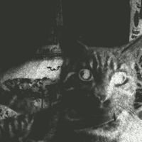 streycat