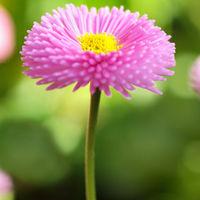 flowersink