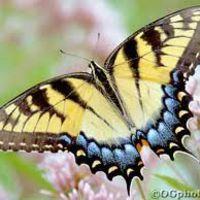butterfliesyay
