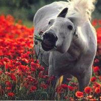 horses1234