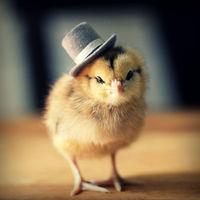 chicksinhats